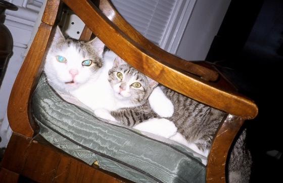 Rufy & Tizzy